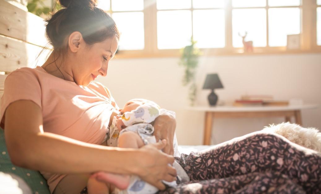 шатавари беременность