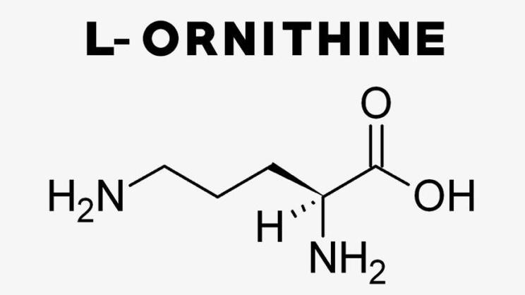 L-орнитин