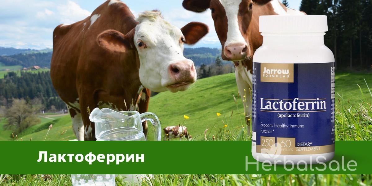 Лактоферрин аптека iHerb